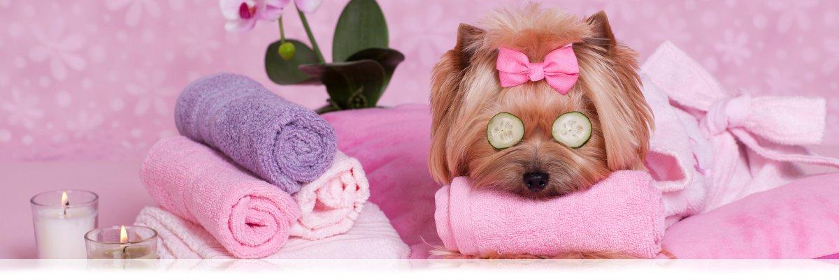 wHunderland Hundesalon - Hundepflege