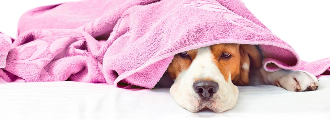 wHunderland Hundesalon - Leistungen