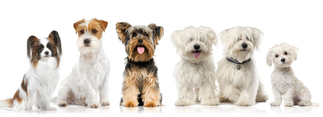 wHunderland Hundesalon - Preis