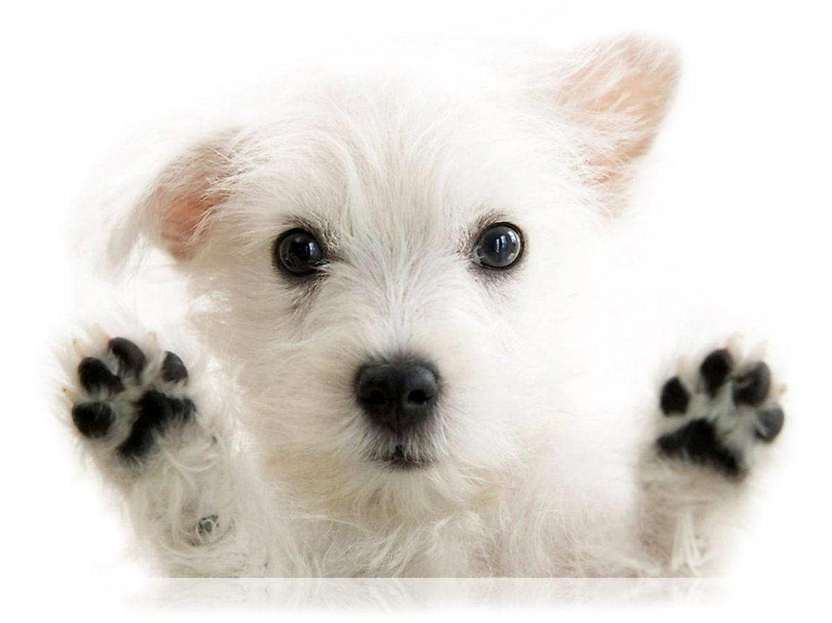 wHunderland Hundesalon - Kontaktieren